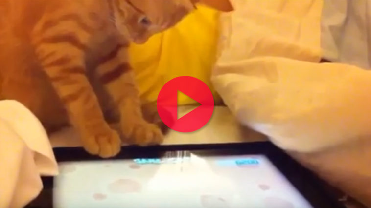 Video animali tablet